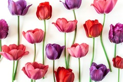 Colorful tulip flowers on white background. Flat lay, top view minimal summer floral pattern composition.