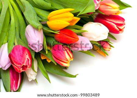 colorful tulips and empty space for your text