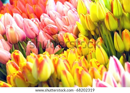 Colorful tulips at the market