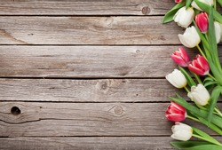 Colorful tulips bouquet on wooden background. Red and white. Top view with space for your text
