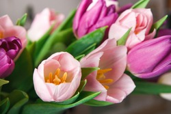 Colorful tulips buds macro closeup background, copy space. Bouquet of flowers