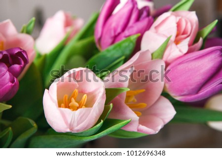Colorful tulips buds macro closeup background, copy space. Bouquet of flowers #1012696348