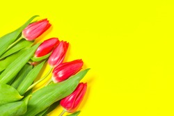 Colorful tulips flowers in a row on yellow background with free space. Mothersday or spring concept.