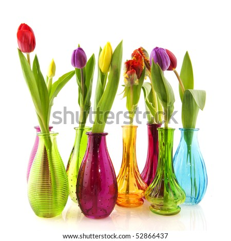 Colorful tulips in glass vases isolated over white