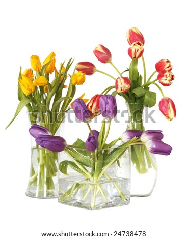 colorful tulips in three glass vases