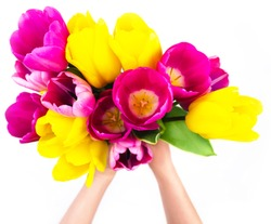 Colorful tulips in woman's hands isolated on white. Blur soft focus. Fresh spring bouquet above. Romantic gift. Present for woman. Love sign. Elegant 8 march, birthday, greeting clipart template