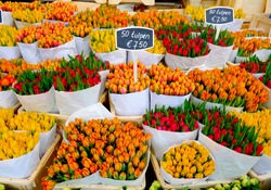 Colorful tulips on sale in Amsterdam flower market