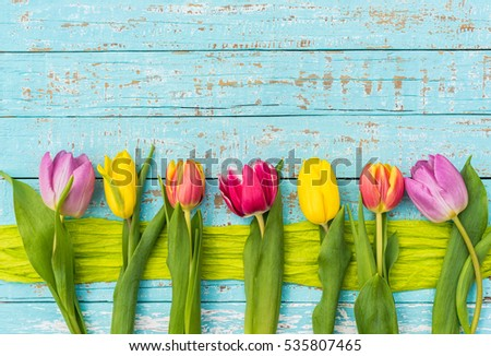 colorful tulips on turquoise...