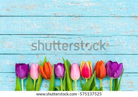 Colorful tulips spring flowers on blue wood, background for Valentine's Day, Birthday, Easter, Mother's and Woman's Day. #575137525
