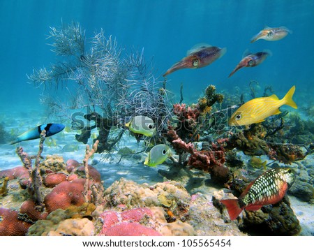 Colorful underwater life with tropical fish and caribbean reef squids in a coral reef
