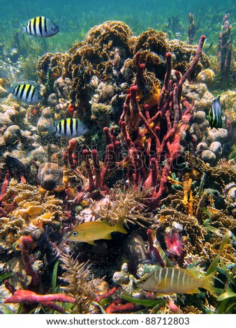 Colorful underwater marine life in a thriving coral reef of the Caribbean sea
