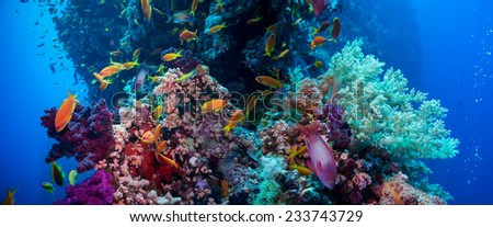 Colorful underwater offshore rocky reef with coral and sponges and small tropical fish swimming by in a blue ocean #233743729