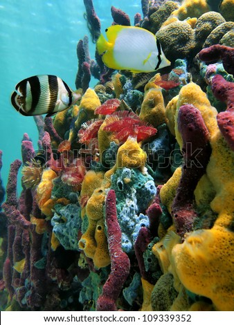 Colorful underwater sea life with sponges, fan worms and tropical fish in a coral reef, Caribbean sea
