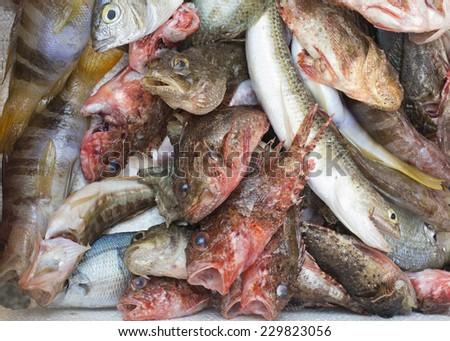 Colorful variety of fish for sale at the main fish market (a street, open air market) in Catania, Sicily, Italy. The photo shows a few Scorpaena papillosa (red rock cod) in the center of the frame.