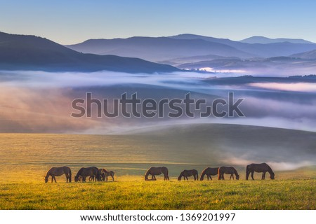 Photo of Colorful view of a herd of horses peacefully grazing. Folded hills in a blue haze. Radiant landscape.Absolutely perfect picture. Sunny meadow covered with blue-pink fog.Altai Republic.Siberia. Russia.