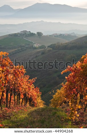 Colorful vineyard in autumn