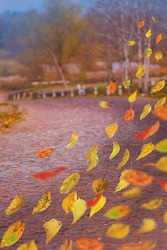 Colorful warm autumn leaves in freefall. Autumn mix leaves in the village.