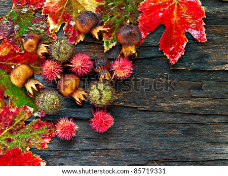 Colorful wet autumn leaves and seed pods arranged on stripped bark.