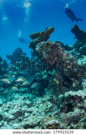 colorful wide angle shot of the caribbean reef with small fish, sponges and coral. Blue caribbean sea in the background. #579923539