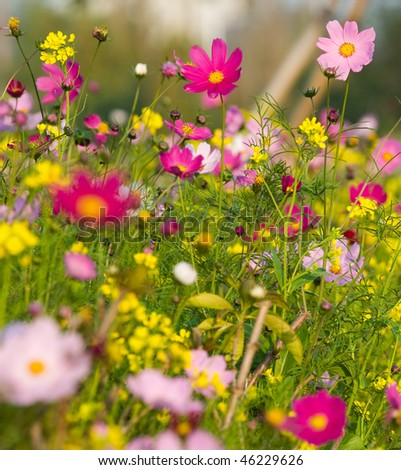 Colorful wildflowers blossoming in field