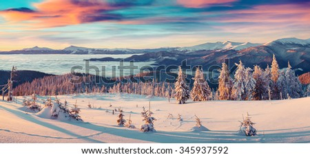 Colorful winter panorama of snowy mountains. Fresh snow at frosty morning glowing first sunlight. Instagram toning.