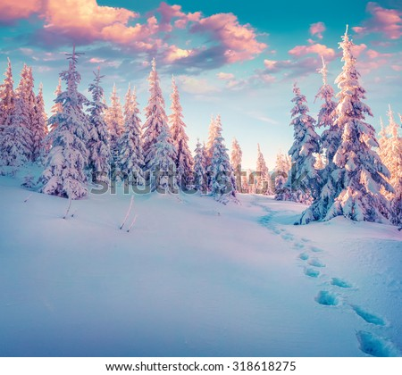 Colorful winter sunrise in the Carpathian mountain forest. Ukraine, Europe. Instagram toning.