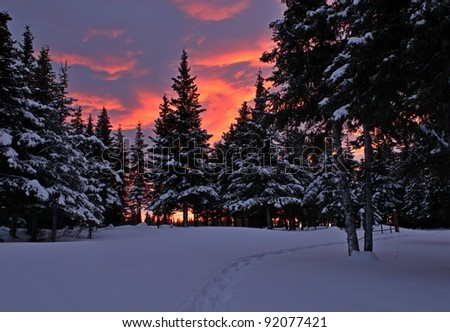 Colorful winter sunset with a path through the snow leading to spruce trees.