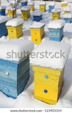 Colorful yellow and blue beehives covered with snow