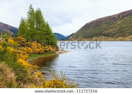 Colorful yellow flowers along a lake side in Scotland