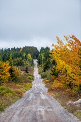Colorful yellow orange foliage in autumn fall in Dolly Sods, West Virginia in National Forest Park with vertical view of dirt road path straight driving point of view