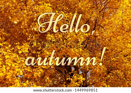 Colorful yellow orange foliage of autumn trees in the forest and text Hello, autumn