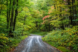 Colorful yellow red foliage in autumn fall season in Dolly Sods in West Virginia in National Forest Park with steep dirt road path driving car point of view