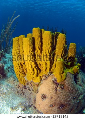 Colorful Yellow Tube Sponge in the Cayman Islands