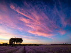 Colorfull clouds in the sunset in a lavender fields