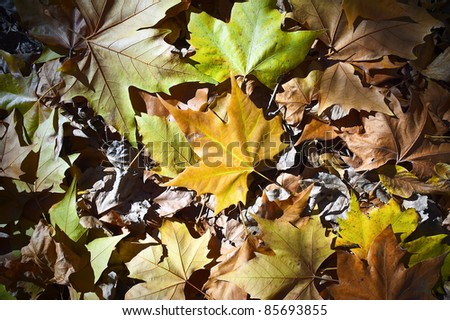 colors, Leaves