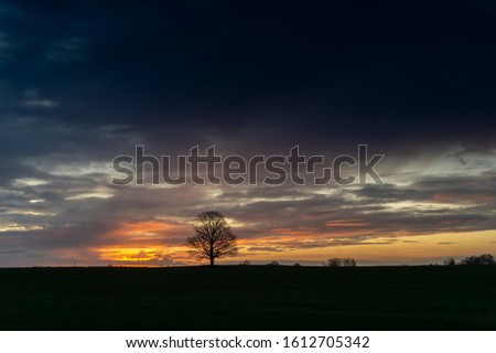 Colors of a beautiful dark sunset with couple of tree silhouettes on horizon skyline, colorful orange and yellow sky and clouds, viewed from low angle