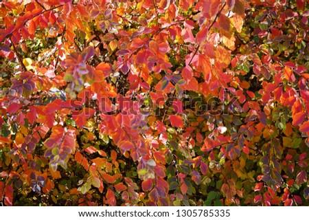 Colors of autumn #1305785335