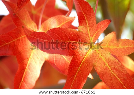 Colors of Fall - stock photo