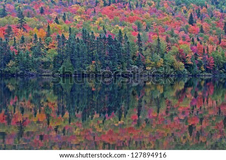 Colors of indian summer - Algonquin Provincial Park, Canada
