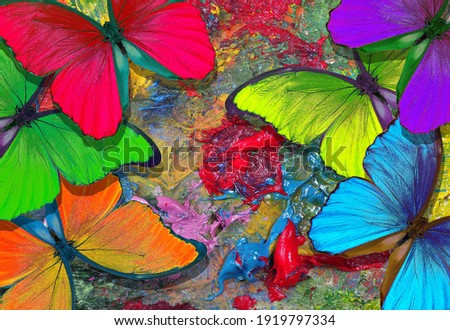 colors of rainbow. color concept. bright tropical morpho butterflies on an artist's palette. art paints and butterflies colorful background Сток-фото ©