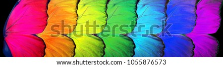 Colors of rainbow. Pattern of multicolored butterflies morpho, texture background. #1055876573