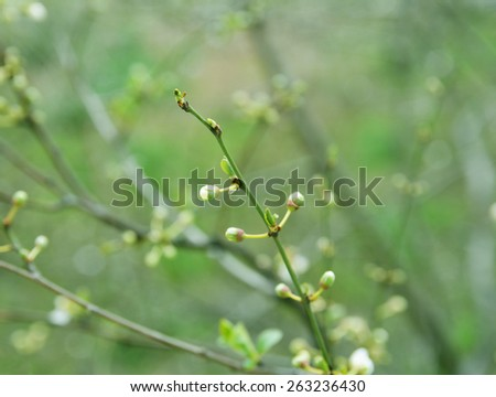 Colors of spring flower buds on the branches of a bush toned photo colors of spring flower buds on the branches of a bush toned photo mightylinksfo