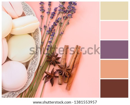 Colour swatch. Pink, brown, purple and olive colours. Romantic spring color palette.