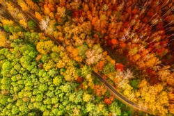 Colourful autumn forest form above with an empty road, captured with a drone. Natural seasonal landscape background.