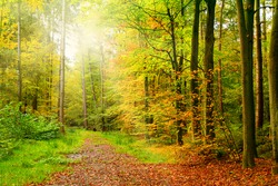 Colourful autumn forest trees in the sun