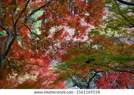 Colourful Autumn leaves in Yoshino, Nara Prefecture, Japan, 2019. ストックフォト ©