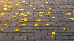 Colourful autumn leaves on brick pavement floor at fall. Autumn yellow leaves on pedestrian passage Maple leaf on wet asphalt road, urban city street background. October september or november weather