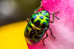 Colourful bug from macro photography with blurry background
