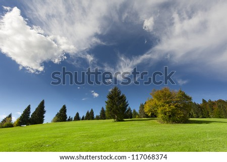 colourful bush in autumn with blue cloudy sky at green meadow
