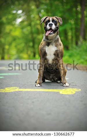 Colourful chalk picture of dog bone on street and happy boxer.